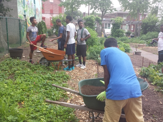 Pottstown High School students use wheelbarrows to transport soil for whiskey barrel gardens. The students traveled to the Pottstown community garden Tuesday as part of a summer youth program.