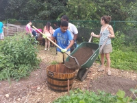 A Pottstown High School student shovels soil into a whiskey barrel in order to make a container garden. Students traveled to the Pottstown Community Garden Tuesday as part of a summer youth program.