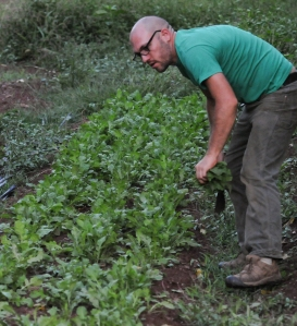 John Strickler - The Mercury David Ryle picks fresh greens for salad as part of the Jubilee Hill farm to table dinner.