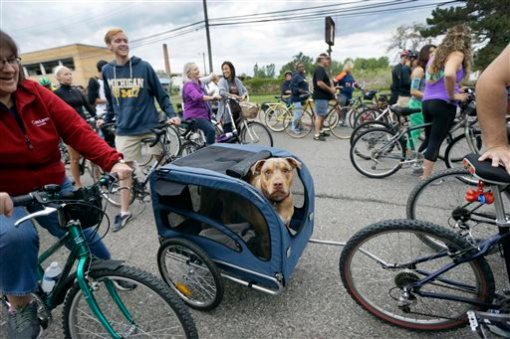 In a photo from Aug. 24, 2015, a pit bull named Ivan waits in a trailer before the Slow Roll Detroit begins in Detroit. Move aside Motor City. Make way for a new export that is turning Detroit's auto legacy on its wheels. Thousands of bicyclists hit the streets Monday evenings from spring to fall for Slow Roll Detroit, an ultracasual 10 mile or so tour of its best and blighted neighborhoods at speeds up to 10 mph. (AP Photo/Carlos Osorio)