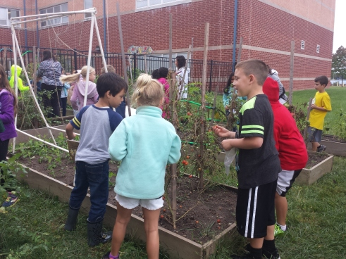 Upper Providence Elementary School students harvest vegetables from the school garden. The food was donated to Project Outreach in Royersford.