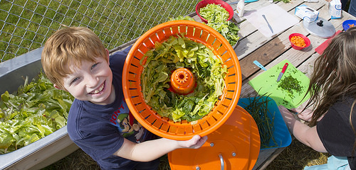 A Colorado elementary school student shows off fresh lettuce grown by students in his school's garden.