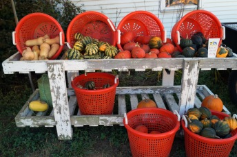 Photo by Emily Ryan Baskets of squash tempt customers at Sugartown Strawberries.