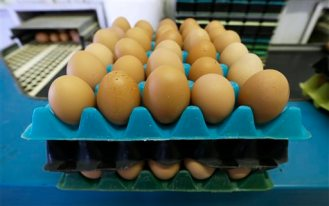 Eggs laid by cage-free chickens sit in a holder after being sorted by Francis Blake on his organic farm, Wednesday, Oct. 21, 2015, near Waukon, Iowa. Blake gathers an average of 2,500 dozen eggs a week from his flock of 5,000 cage-free hens. An increasing customer demand for more eggs from chickens free from cages has left U.S. egg farmers with the question of whether to spend millions of dollars to convert or build cage-free barns. (AP Photo/Charlie Neibergall)