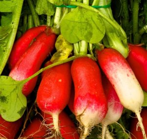 This May 25, 2013 photo shows French breakfast radishes at the Bayview Farmer's Market in Langley, Wash., that are typical of many edibles that are eaten raw. They need to be washed before serving to remove dirt and bacteria as well as any residual pesticides. (Dean Fosdick via AP)