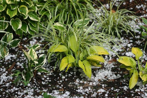 Gardening-Weather Resilient
