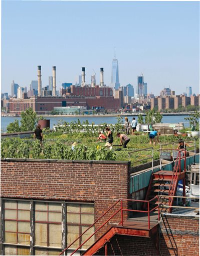 Spring Homes Rooftop Gardening
