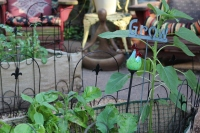 This Pottstown home garden won third place in the grocery category for the 2016 Home Garden Contest. Entrants of this category showed off the vegetables and herbs they grew.