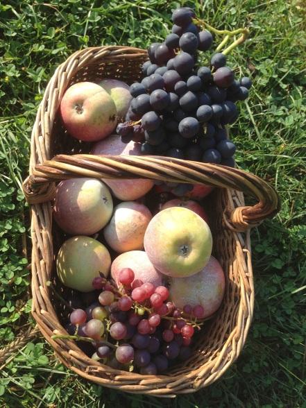 Gardening Harvesting Fruit