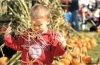Nicholas Bussell, 2, plays with hay during The Whitemarsh Fall Pumpkin Festival which took place at Plymouth Whitemarsh High School's Victory Field. The event included hayrides, face paintings, pumpkin decorating, rides, inflatables, vendors and more.  Digital First Media File Photo.