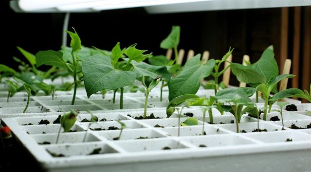 Gardening Basements