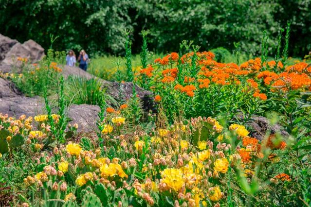 Gardening Plants Are Social